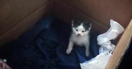 Elle entend un chat crier de toutes ses forces, le trouve dans un carton et n'en croit pas ses yeux !
