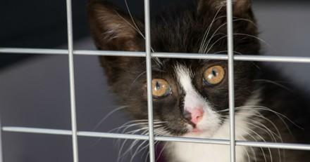 Elle vivait avec 40 chats dans un F3, la Fondation Brigitte Bardot intervient
