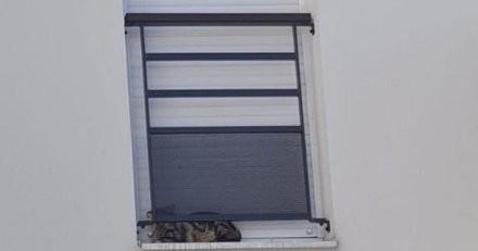 Chat sur un rebord de fenêtre : les voisins contactent son maître, mais ils réalisent vite leur terrible erreur