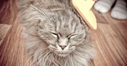 Comment limiter les boules de poils chez son chat ?