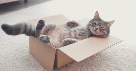 """Un chat se prend d'affection pour un """"jouet"""" très particulier et ne le quitte plus !"""