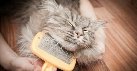 Soins, brossage, médicaments… Mon chat ne supporte pas d'être manipulé, comment faire ?