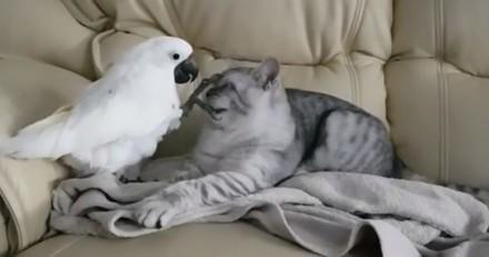 Le chaton se détend sur le canapé : quand un cacatoès arrive, les invités retiennent leur souffle (vidéo)