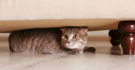 Mon chat se cache tout le temps, pourquoi ?