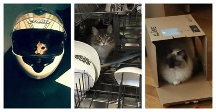 Les 25 photos de chats cachés les plus insolites