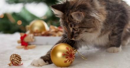 Noël 2018 : 5 idées de cadeaux à déposer sous le sapin pour votre chat !