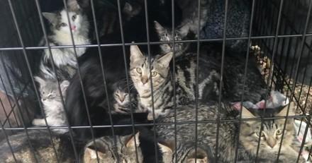 Cage pleine de chatons abandonnée près d'une rivière : un détail rend les bénévoles furieux