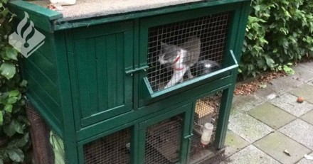 Ils partent en vacances et laissent leur chatte et 3 chatons dans des cages à lapin (Photos)