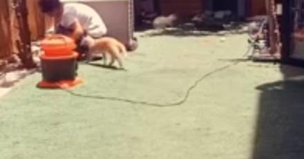 Une bénévole nettoie la chatterie : un chat s'élance vers elle et lui dit merci d'une manière totalement inattendue