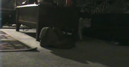 Suite à la disparition (récurrente) de ses chaussettes, cette femme a eu une brillante idée (Vidéo)