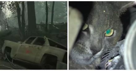 Il sauve un chat dans une ville ravagée par les flammes, la vidéo fait pleurer tout le monde
