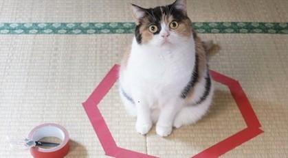 Comment attraper son chat dans un cercle de ruban adhésif  : le nouveau jeu qui amuse le web !