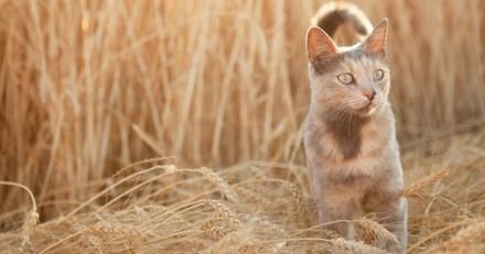 Les chats, l'avenir des agriculteurs ?