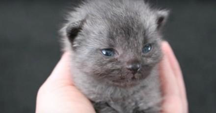 Ils sauvent un chaton et n'en croient pas leurs yeux quand il change de couleur (Vidéo)