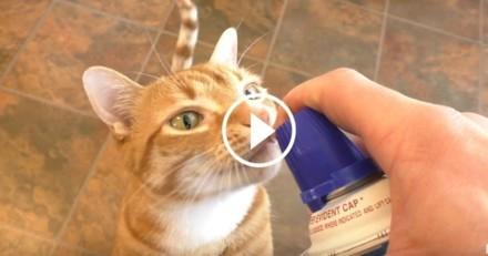 Fan de chantilly, ce chat est prêt à tout pour en avoir ! (Vidéo du jour)