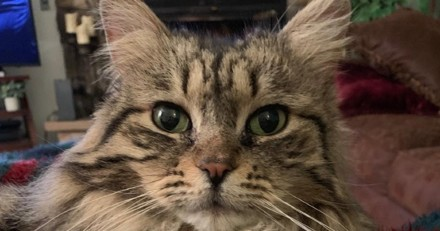 Elle voit son chat entrer dans sa chambre avec quelque chose dans sa bouche : même sa fille n'y croit pas !