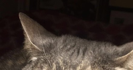 Une ado partage une photo de son chat sur Twitter : les internautes deviennent totalement fous !