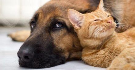 Comment bien préparer son chien ou chat à la rentrée ?