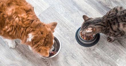 Alimentation pour chien et chat : pourquoi privilégier le bio dans leurs gamelles ?