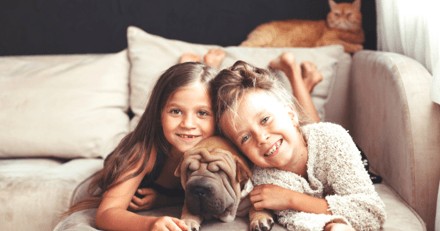 Caca mou, appétit fluctuant, une étude montre que l'on se fait autant de soucis pour nos animaux que pour nos enfants