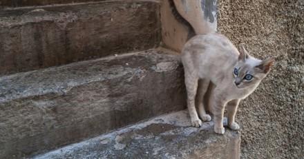 Alerte : attention à vos chats si vous habitez dans les Bouches-du-Rhône !