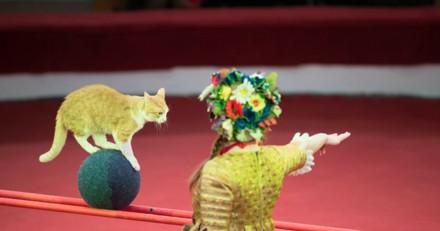 Des chats dans des cirques pour remplacer les fauves : la vidéo qui dénonce