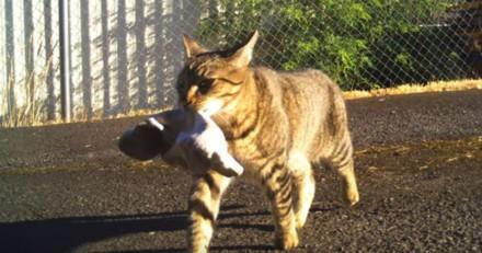 Ce policier voit son chat lui ramener un sac, il regarde dedans et n'en revient pas !