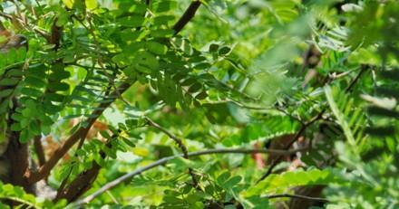 De loin, il voit un chat coincé dans un arbre mais se rend vite compte qu'il s'est totalement trompé