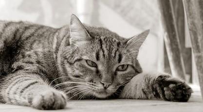 Comment lutter contre la déprime saisonnière du chat ?