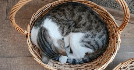 Les meilleures corbeilles pour chat en 2021