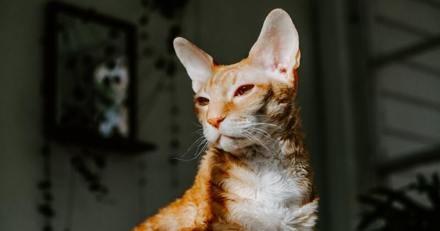 Son chat Cornish Rex est recueilli par un refuge, ce qu'on lui dit lui fait perdre son sang-froid