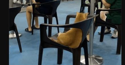 Un chat entre dans un centre de vaccination contre le Covid : ce qu'il fait attire tous les regards !
