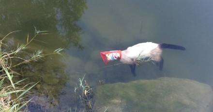 Balade autour du lac : dans l'eau ils aperçoivent un paquet de chips et poussent un hurlement