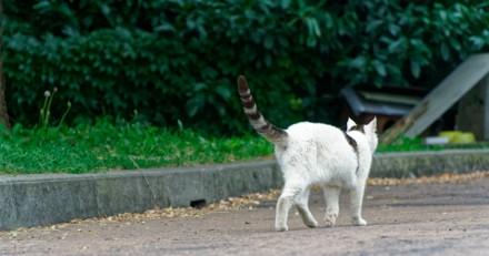 Haute-Savoie : des chiens et chats retrouvés empoisonnés, une alerte est lancée sur Facebook