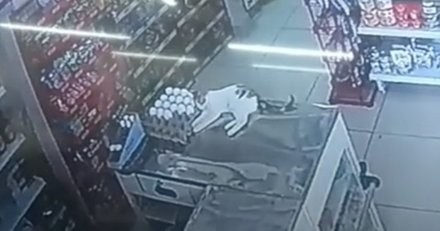 Un chat faisait la sieste sur le comptoir d'un supermarché, il se réveille et… c'est le drame (vidéo)