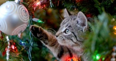3 astuces pour que votre sapin survive aux attaques de votre chat