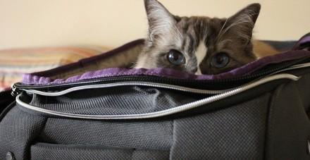 Faire garder son chat pendant les vacances : conseils et solutions