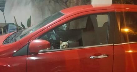 Il voit les feux de détresse de la voiture allumés, regarde par la vitre et reste bouche bée
