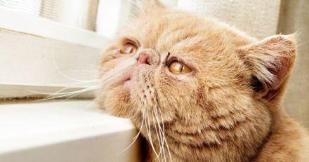 Le chat et la déprime hivernale : comment lui redonner le moral ?