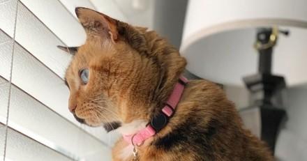 Ce chat « double face » est l'un des plus beaux animaux du monde (Vidéo)