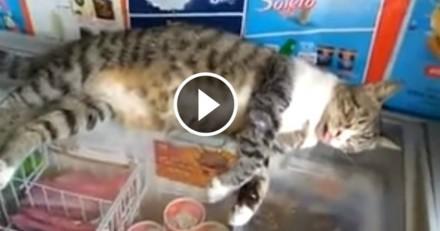 Ce chat a trouvé le spot parfait quand il fait chaud (Vidéo du jour)