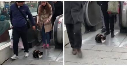 Ce chat roupille tranquille à la sortie du métro, gêne tout le monde et s'en fiche royalement (Vidéo du jour)