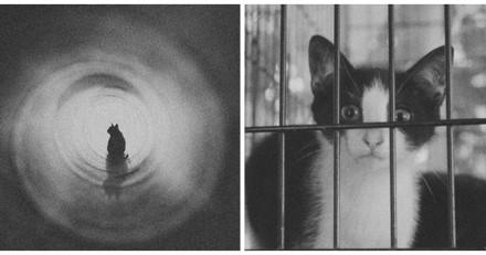 Ils sauvent un chaton coincé dans les égouts et n'en reviennent pas de ce qu'ils voient