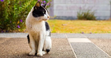 Leur chat rentre de chasse, ce qu'il recrache sur le sol du salon leur arrache un cri de stupeur