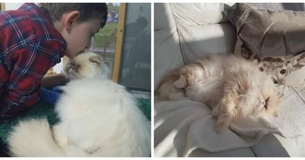 Ce chat a sauvé un petit garçon autiste et maintenant c'est lui qui le sauve