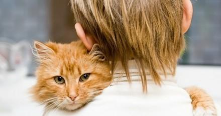 8 races de chats qui s'entendent très bien avec les enfants