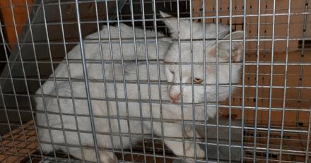 Un chat s'incruste dans le service des urgences d'un hôpital : il était recherché depuis 3 ans !