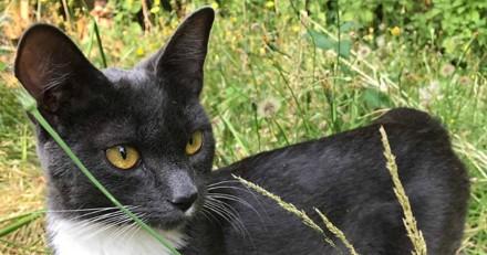 Un chat errant s'installe dans une maison et fait une belle surprise à sa nouvelle famille