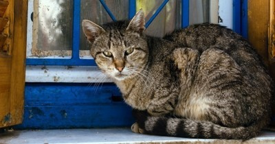 Comment apprivoiser un chat sauvage ?