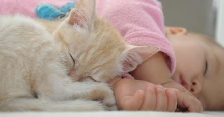 Existe-t-il un risque d'allergie au chat pour bébé ?